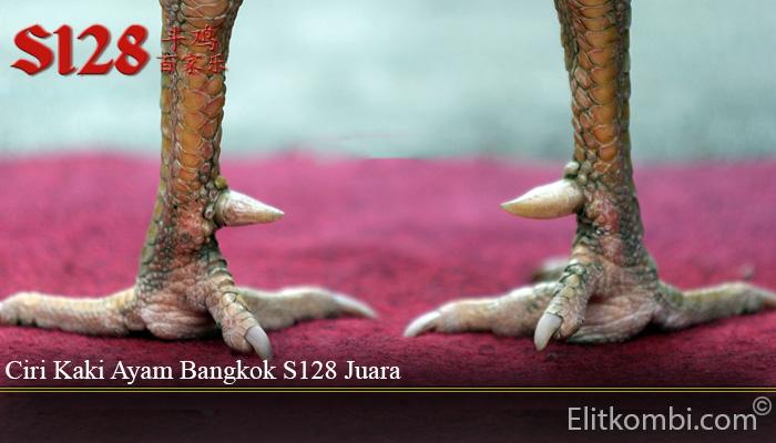 Ciri Kaki Ayam Bangkok S128 Juara