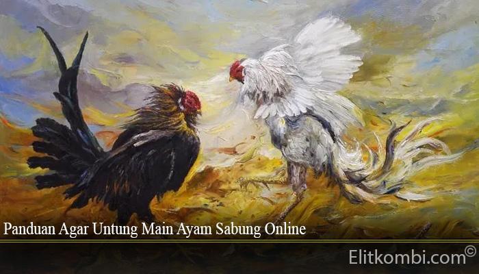 Panduan Agar Untung Main Ayam Sabung Online